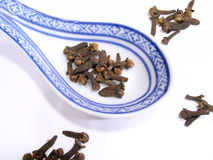 Clove. Cooking spice royalty free stock photo