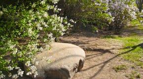 Clove garden Stock Image