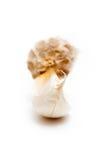 Clove of garlic Stock Photo