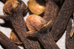 Clove spice Stock Image
