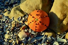 Clove spice spiked Christmas decorated orange on the beach Christmas in July royalty free stock photo