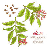 Clove vector set. Clove branches vector set on white background Royalty Free Stock Photography