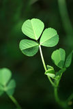 Clover. And all shades of green clover symbol of nature Royalty Free Stock Photos