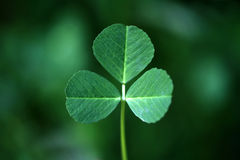 Clover. And all shades of green clover symbol of nature Stock Photo