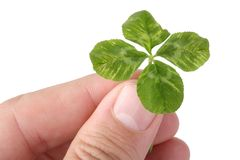 Free Clover Royalty Free Stock Image - 11036906