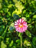 clover fotografering för bildbyråer