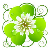 Clover. Vector icon: flower of clover Royalty Free Stock Photography