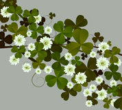 Clover. Background illustration with clover leaves and flowers Stock Photo