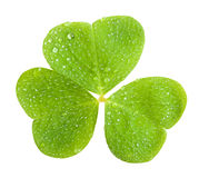 Clover. A clover, isolated on green royalty free stock photos