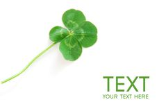 Free Clover 2 Stock Photography - 10031302