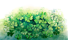 Clover Stock Photography