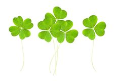 Clover. A clover isolated on white stock image