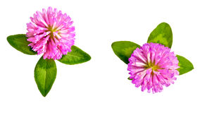 Clover Stock Images