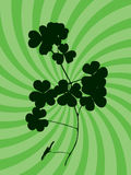 Clover. Silhouette of green clover over abstract background Royalty Free Stock Image