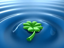 Clover. Floating on fresh water Royalty Free Stock Image
