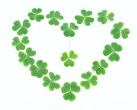 Clover Royalty Free Stock Image