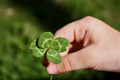 Clover Royalty Free Stock Photos
