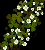 Clover background. Design for St. Patrick's Day Stock Photo