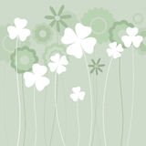 Clover background Stock Photography