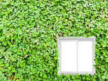 Clover background in the garden Stock Images