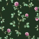 Clover background Royalty Free Stock Photos