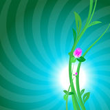 Clover. Blue sky with grass and clover Royalty Free Stock Images