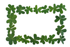 Clover Boarder or Clover Frame. Frame or boarder made of fresh green clover, perfect for St. Patrick's Day Royalty Free Stock Photography