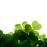 Clover border isolated. Royalty Free Stock Photos