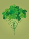 Clover bouquet on sticks. Greeting otkryka on St. Patrick`s Day. Royalty Free Stock Photo