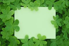 Clover Card Stock Photography