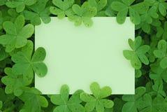 Clover Card Stock Photography