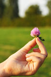 Clover in child's hand Royalty Free Stock Photography