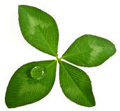 Clover with drop Royalty Free Stock Images