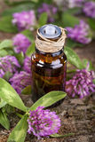 Clover essential oil Royalty Free Stock Photos