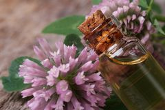 Clover extract in a bottle nd flowers macro horizontal Stock Photo