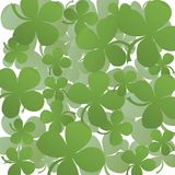 Clover field Stock Image