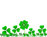 Clover field, background. Clover leaves isolated in a white background Stock Images