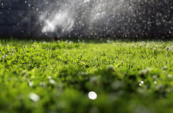 Clover field. Watering green fresh clover garden royalty free stock images