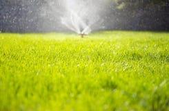 Clover field. Watering green fresh clover garden Royalty Free Stock Photo