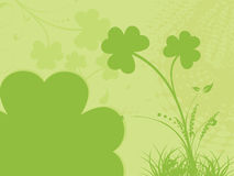 Clover floral background for celebration 17 march Stock Photos