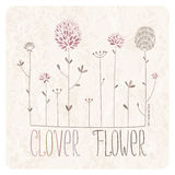Clover Flower Meadow Stock Photos