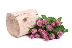 Clover flowers near a wooden deck isolated on white Royalty Free Stock Images