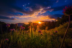 Clover Flowers at Sunset Sequoia National Park Stock Photography