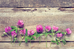 Clover flowers on wooden background. Row of clover flowers on wooden background royalty free stock photos