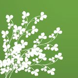 Clover foliage. Background for design Stock Photography