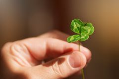 Clover four-leaved for luck Stock Photos