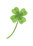 Clover with four leaves Royalty Free Stock Images