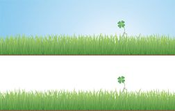 Clover in the Grass. A clover growing up among the grass of a field, on white and blue background versions Stock Image