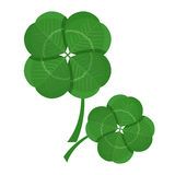 Clover green leaves isolated on white background. Trefoil foliage. Vector illustration in realistic style design. Symbol of Saint Patrick day holiday Royalty Free Stock Images