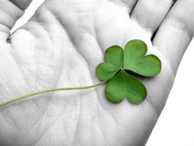 Clover in the hand royalty free stock images